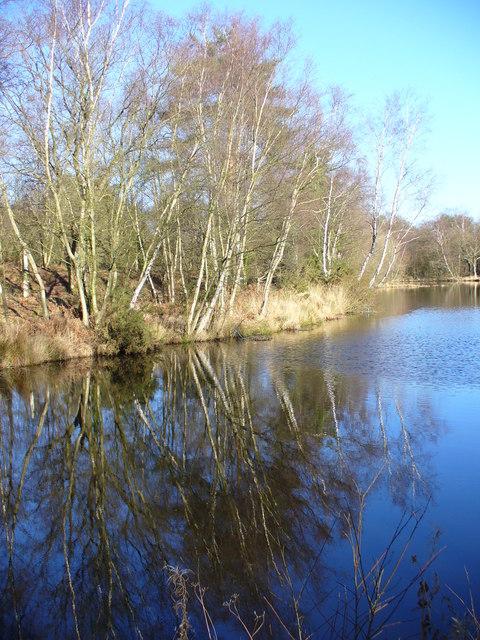 Silver Birches, Shortheath Pond