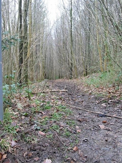 View NW along footpath in Covert Wood