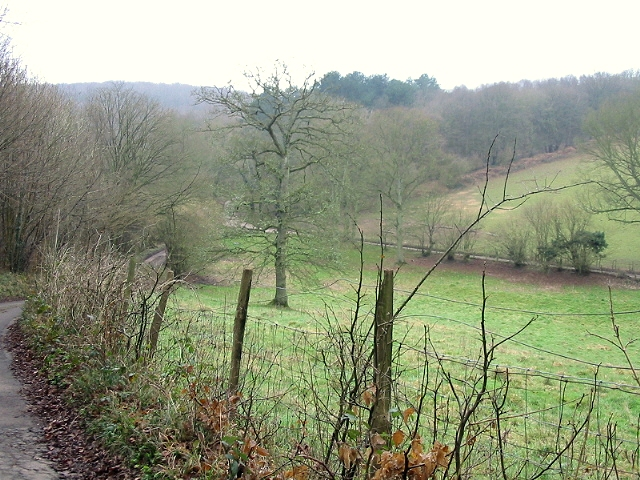 View of valley bottom from road in Covert Wood