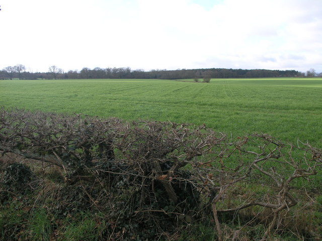 Fields to Holly Coppice