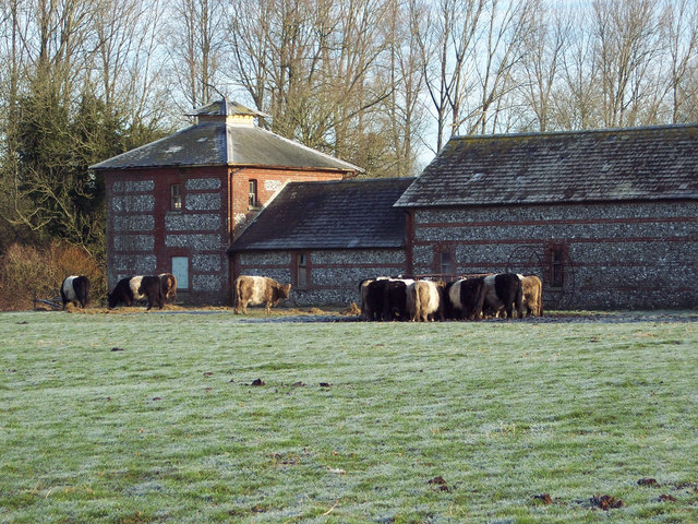 Belted Galloways at Faulston Farm