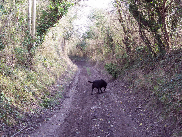 Byway to the Old Shaston Drove from Barford St Martin