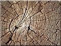 TL7889 : Old Oak by Keith Evans