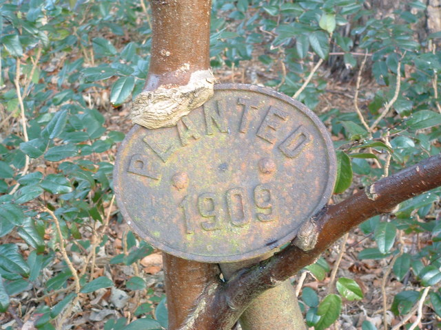 Planted 1909