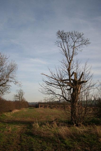 Navenby Low Fields