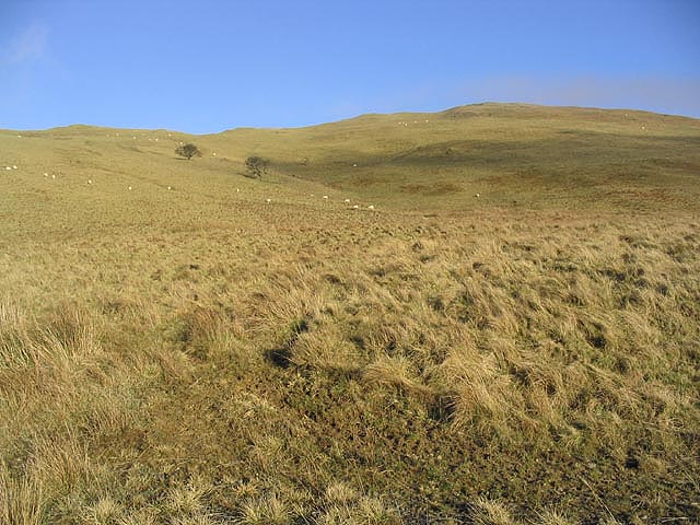 Rough grazing on Binks Hill