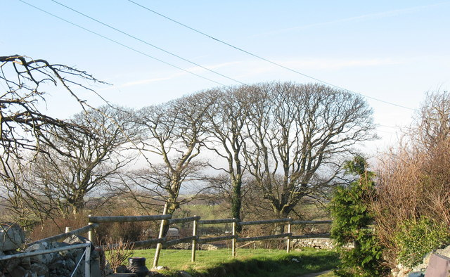 A line of trees at Coch-hir