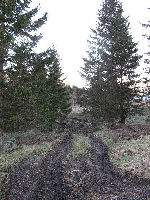 Woodland, Ardchyle