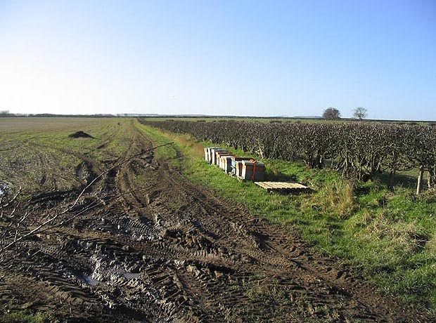 Field with beehives by a hedge