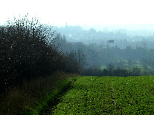 Hedgerow separates Hathern Road from farmland