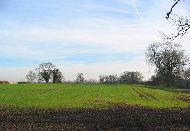 Winter crop north of The Hough