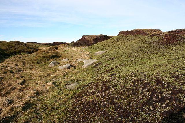 The greening of Bleaklow