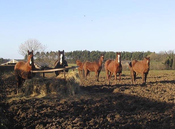 Horses at Doxford Farm