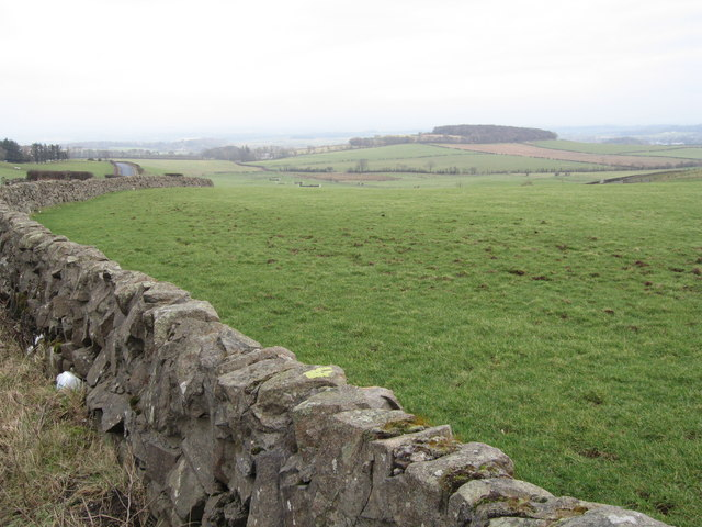 Wall and Field