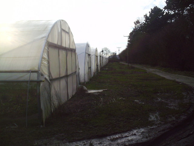 Polytunnels at Waterybutts Farm
