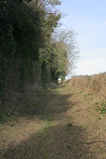 Hinton Lane, nr Cheriton