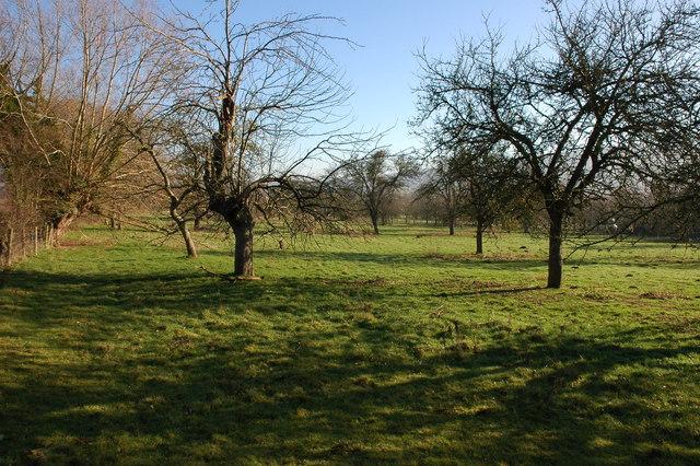 Orchard, The Croft Farm