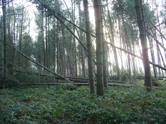 Storm damage, Sherwood Pines