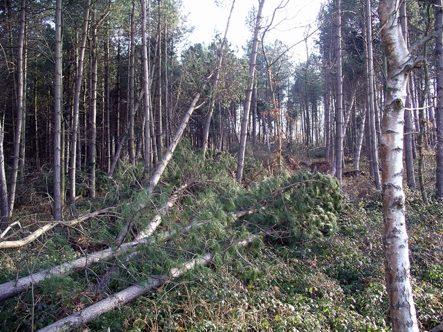 Storm damage, Sherwood Pines, 2