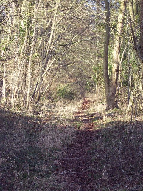 Footpath to Bavestock Long Coppice