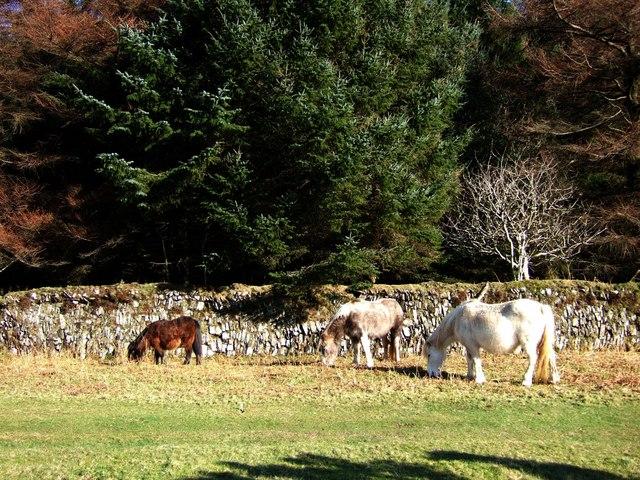 Ponies on Yennadon Down