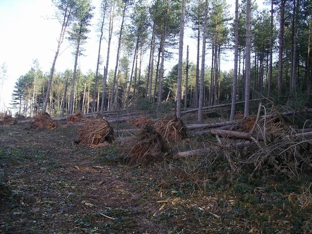 Storm damage, Sherwood Pines, 3
