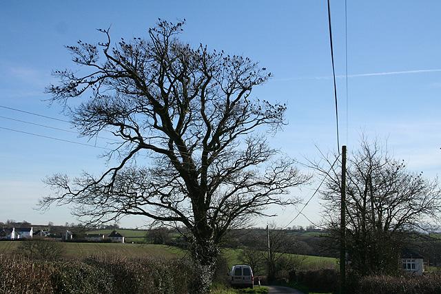 Broadwoodkelly: flock of starlings in a tree