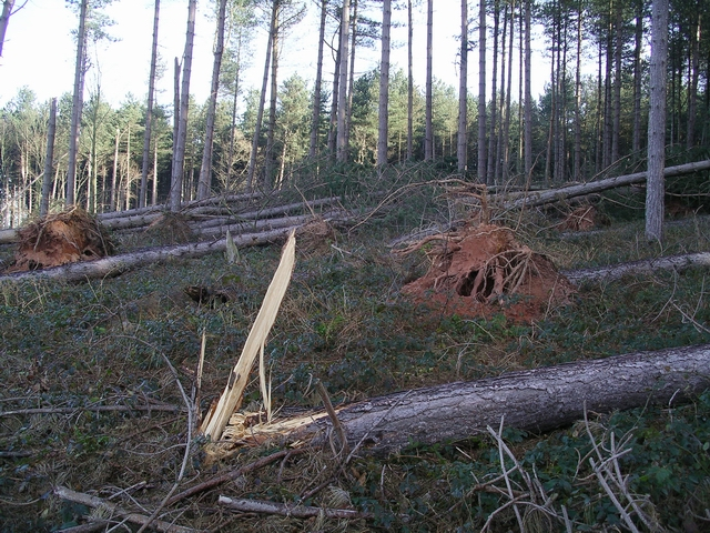 Storm damage, Sherwood Pines, 4