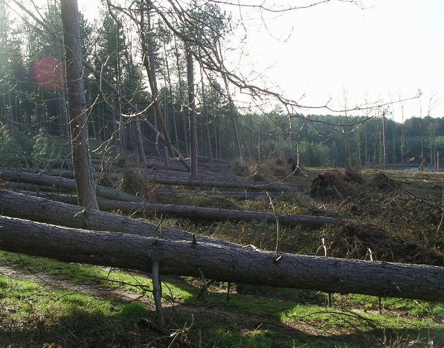 Storm damage, Sherwood Pines, 5