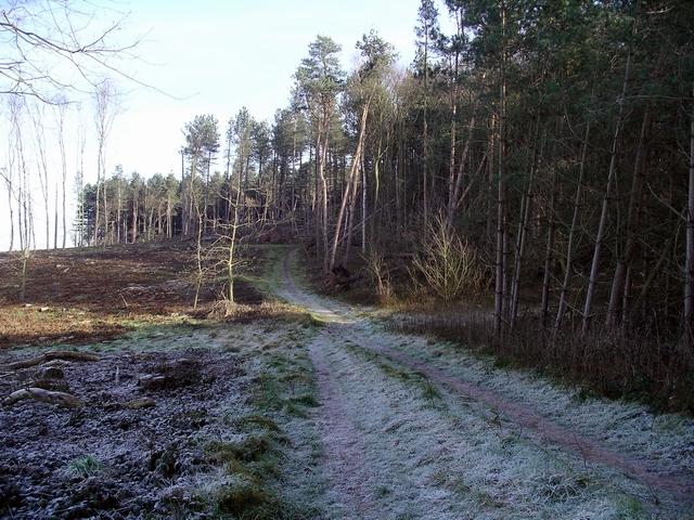 Frosty morning, Sherwood Pines
