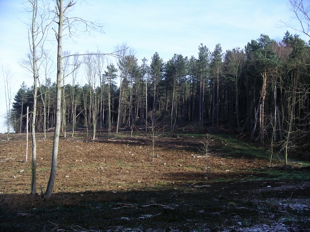 Storm damage, Sherwood Pines, 6