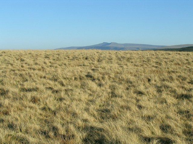 Hill top near Twyn Perfedd
