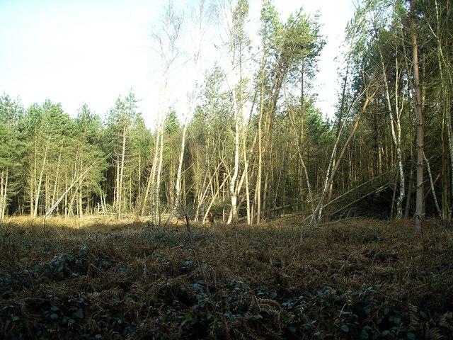 Storm damage, Sherwood Pines, 7
