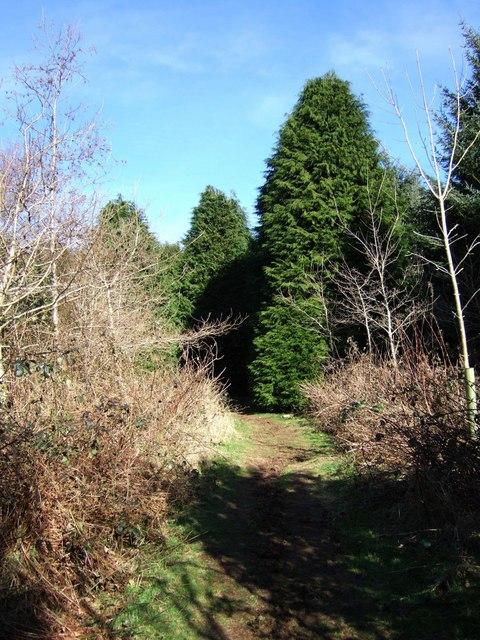 Path through Peekhill Plantation