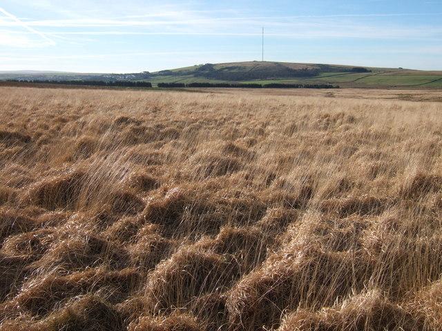 Grass moorland west of Holming Beam
