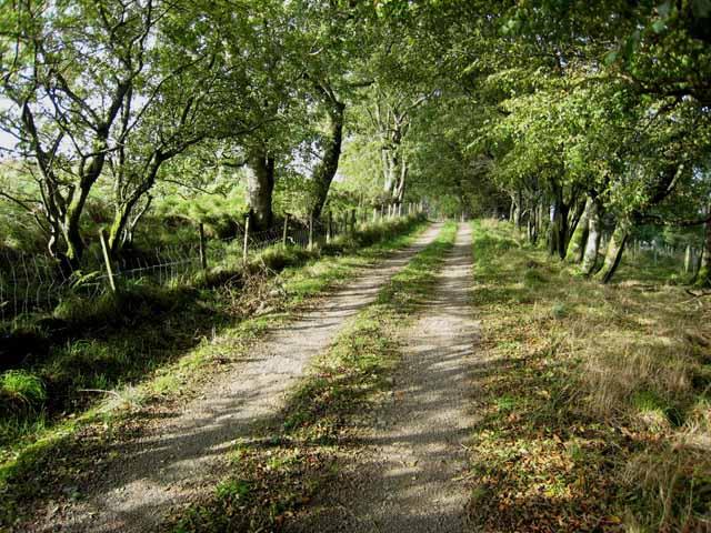 Letterpin Woods