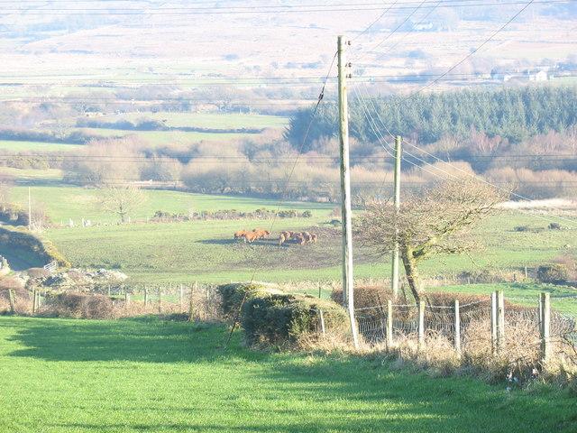 Cattle in the Cegin Valley