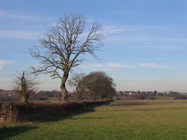 Hedge Line near Holt