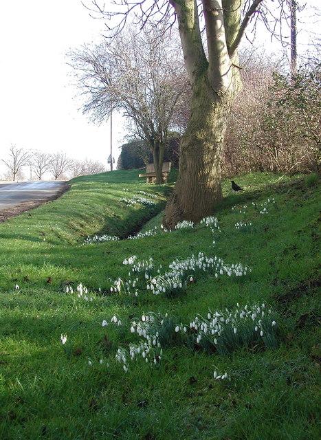 Back Lane, Danthorpe