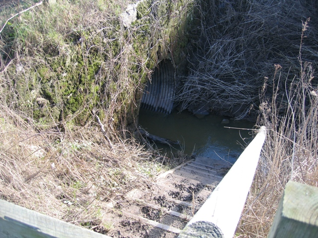 Drainage Ditch in the River Dee Flood Meadows