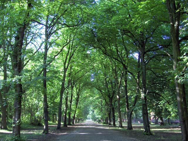 Alexandra Park in June