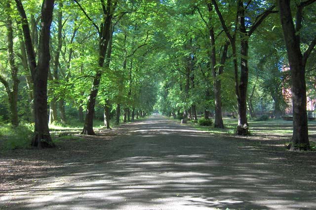 Alexandra Park in June (2)