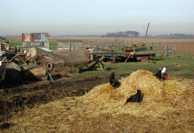 Yew Tree Farm, Elstronwick