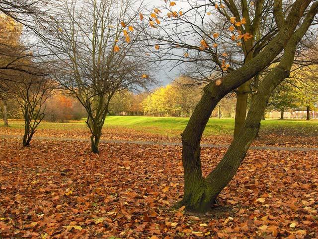 Alexandra Park in November