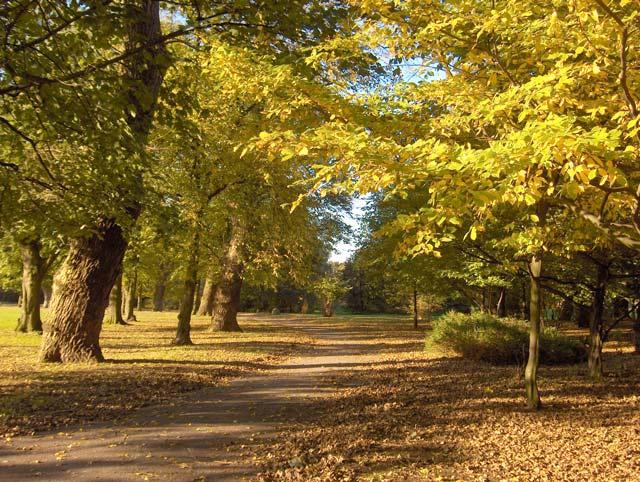 Alexandra Park in November (2)