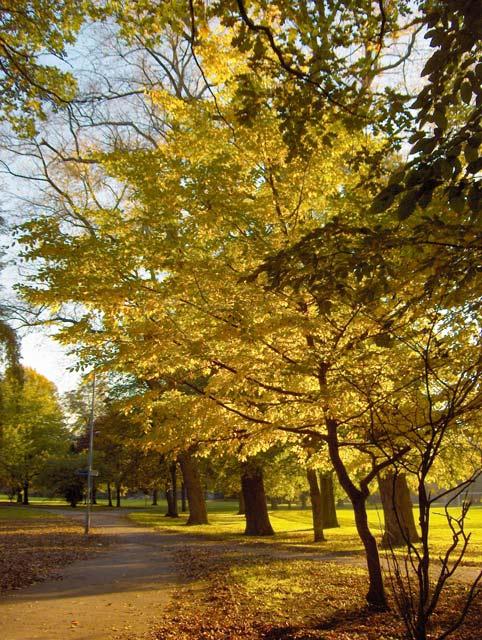 Alexandra Park in November (3)