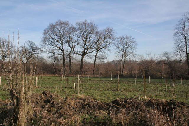 New afforestation looking into Rand Wood