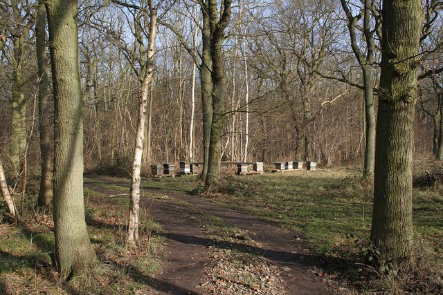 Beehives in Fulnetby Wood