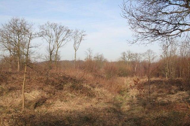 Earthwork in Newball Wood