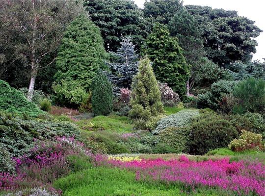 Heather Garden, Ness Gardens